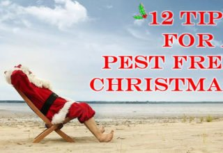christmas pest control tips