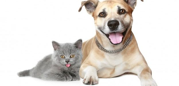 cat and dog pets in pest-free home