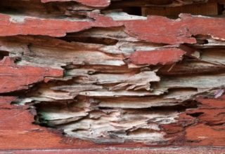 property damage caused by termites