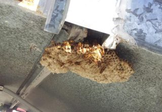 before wasp control treatment
